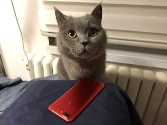 悲哀!你不仅活得不如呱,就连猫都不如