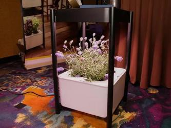 在家里建花园 Miracle Gro在CES2019推出室内种植园