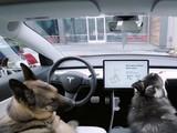 """将狗留在车里被举报 特斯拉车主当庭解说""""狗狗模式"""""""