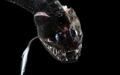 酷似毒液 一批深海鱼类被科学家发现 这外观不忍直视