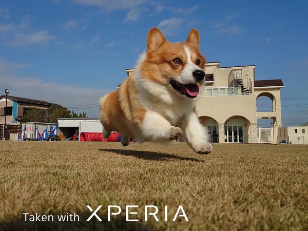 """继承纯正血统:""""掌上微单""""索尼Xperia 1 II"""