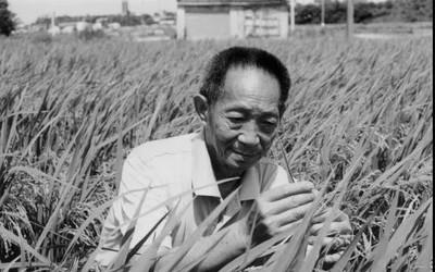 痛心!雜交水稻之父袁隆平院士搶救無效逝世 享年91歲